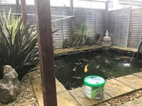 free koi carp rescue and advice for free