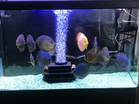 Stendker discus for sale