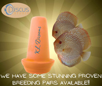Proven breeding pairs available