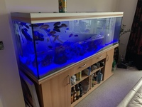 Rena fish tank, 6ft with stand,external filter.