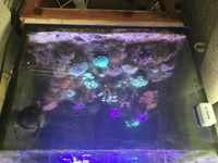 40 gallon reef tank inc hard and sps corals has plus fish ( no stand)