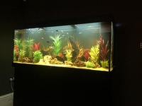 Jewel Rio 450l LED Aquarium & Cabinet Complete Set up with Fish