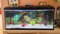 160L Aquarium with all accessories and more