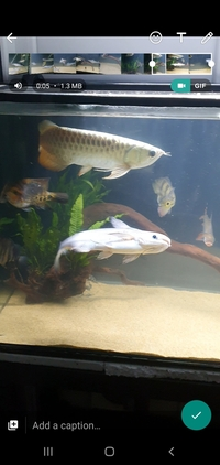 PREDATORY TROPICAL FISH FOR SALE